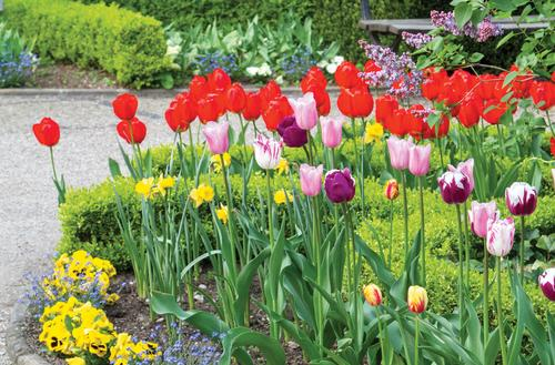 Na powitanie wiosny